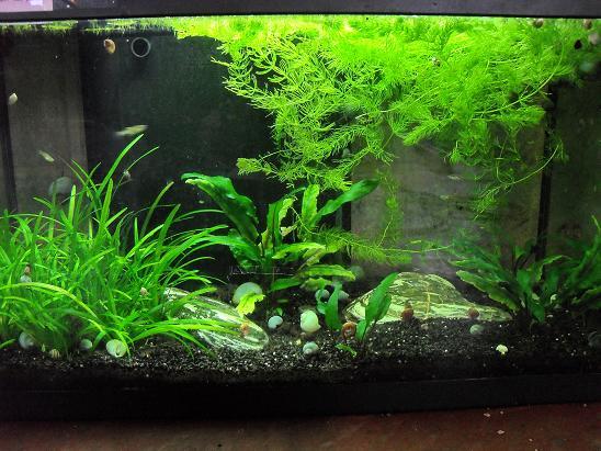 ma shrimproom et fishroom Sdc12058-1d0f44c