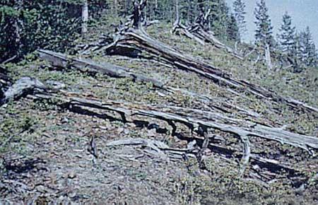 Enigme de l'explosion de Tunguska en Sibérie dans ENIGMES - MYSTERES : tun_002-1cf81d0