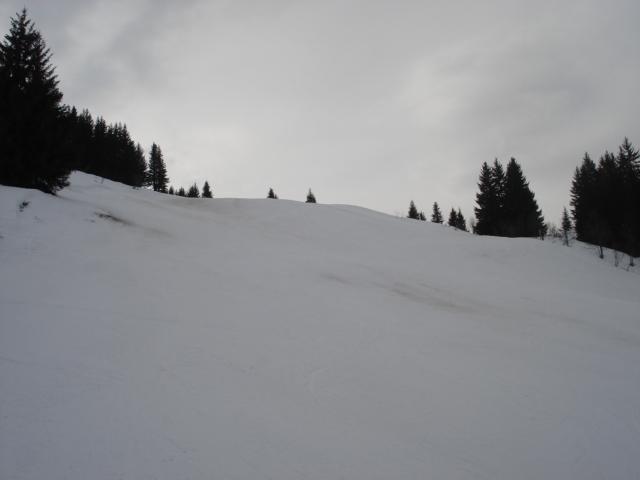 Chevreuil / Megève Jaillet Dsc03903-8563ef