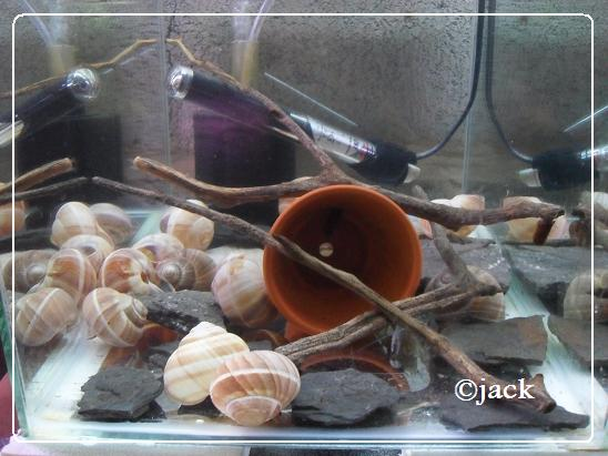 ma shrimproom et fishroom Sdc12568-1eb65d1