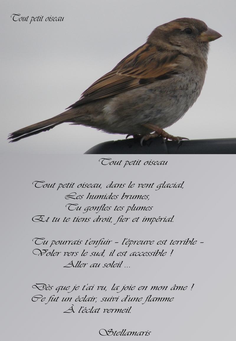 Tout Petit Oiseau Stellamaris Poèmes Et Photographie