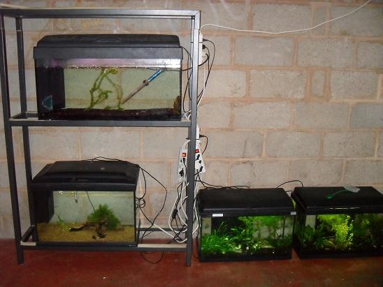 ma shrimproom et fishroom Sdc12064-1d0f3c6