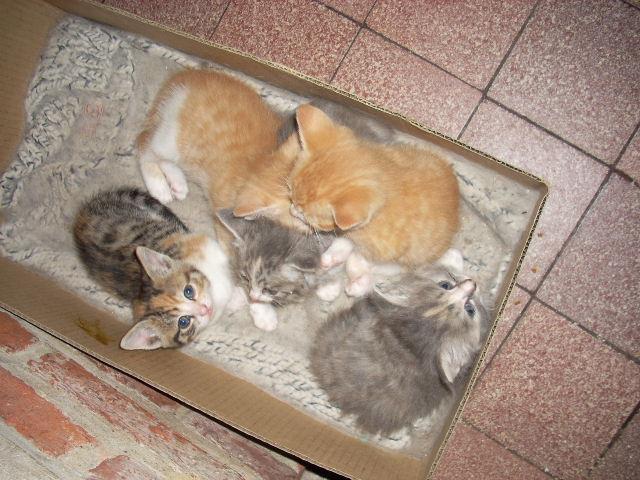 Mon nouveau chat Photo-139-1cdcf31